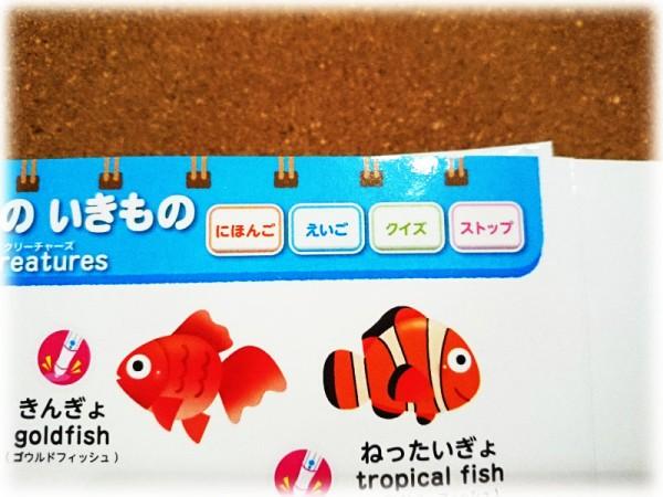 日本語と英語が選べます。